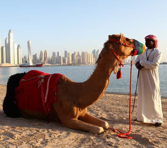 incentive-travel-activities-camels-on-beach.jpg