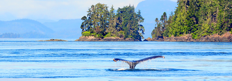 Whale watching in Vancouver on an incentive travel trip
