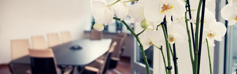 A meeting room in an office with orchids blooming